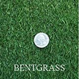 Penncross Creeping BentGrass Seeds, 5 Pounds