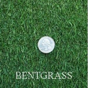 Penncross Creeping BentGrass Seeds, 5 Pounds by SEEDS2GO