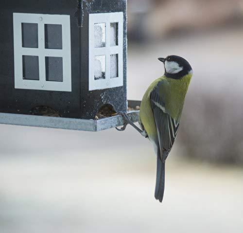 - Home Comforts Acrylic Face Mounted Prints Bird Seed Small Birds Feeding Bird Table Bird Food Print 24 x 36. Worry Free Wall Installation - Shadow Mount is Included.