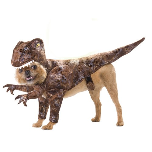 [Animal Planet PET20109 Raptor Dog Costume, Small] (Costumes For A Cat)