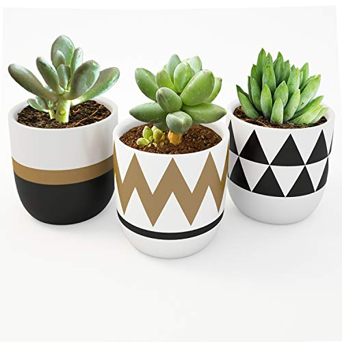 Modern 4-Inch Ceramics Succulent Planter Flower Pots Mini Planter Indoor for Cactus or Small Plants