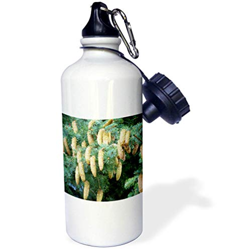 3dRose Jos Fauxtographee- Pine Cones - Many Pine Cones Growing on a Tree of Green - 21 oz Sports Water Bottle (wb_298347_1)