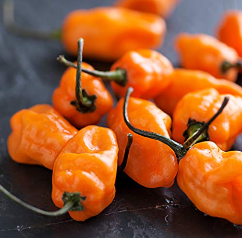 Sweet Yards Seed Co. Organic Orange Habanero Hot Pepper Seeds - Two Seed Packets! - Approx. 50 Open Pollinated Non-GMO Seeds