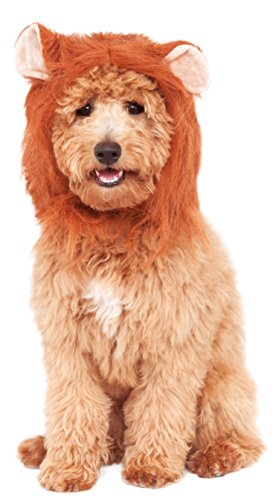Rubies Costume Company Lion's Mane Costume Accessory for Pets, Small/Medium (Lion Dog Costume Animal Planet)