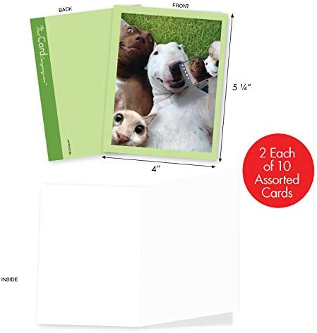 Any Occasion Details about  /Funny Animal Selfies Greeting Card Blank Inside Adorable