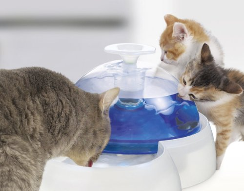 Amazoncom Catit Fresh Clear Drinking Fountain For Cats And