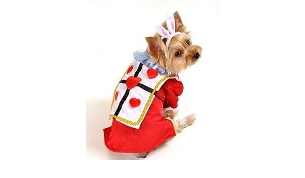 Boy mascota perro conejo blanco Alicia en el País de las ...