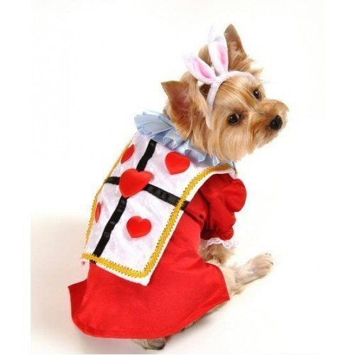 Boy Pet Dog White Rabbit Alice in Wonderland Halloween Fancy Dress Costume Outfit (Extra Small) -