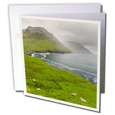 3dRose Danita Delimont - Sheep - The west coast at Nordradalur. Denmark, Faroe Islands - 6 Greeting Cards with envelopes (gc_277357_1)