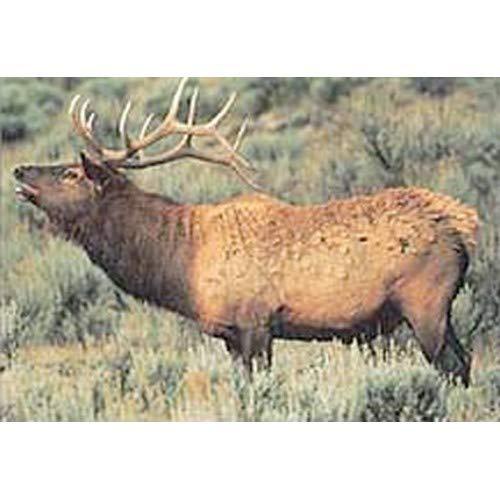 Delta Tru-Life Paper Targets - Elk
