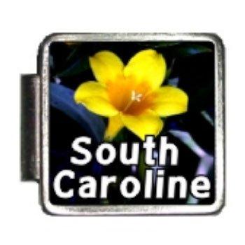 Amazon South Carolina State Flower Yellow Jessamine Photo