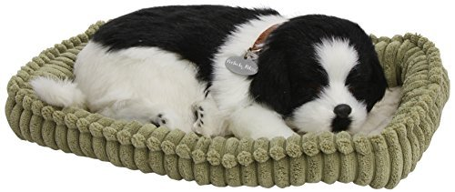 Border Collie - Pet Mate / Nap Breathing Life Like Sleeping Dog in Bed Sleeping Pet by Precious Petzzz (Life Nap Breathing)
