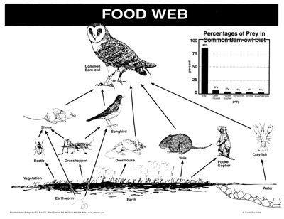 Owl food chain worksheet food for Food bar owl