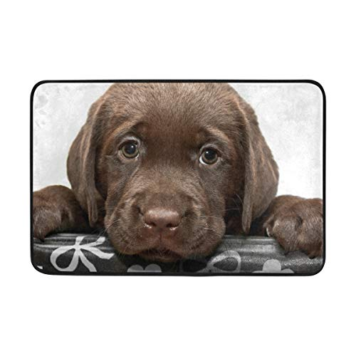 - DEYYA Home Decor Animal Chesapeake Bay Retriever Puppy Printed Non Slip Door Mat Pad Entrance Mat Living Room Bedroom Carpets Doormats 23.6 x 15.7 Inch