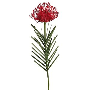 "23"" Needle Protea Spray Flame (pack of 12) 62"