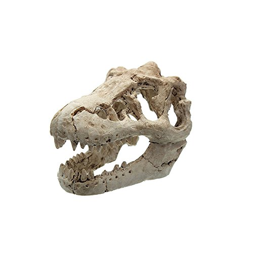 - Skull Resin Aquarium Fish Tank Terrarium Decoration, Reptiles House Cavern Home Lizard Cave, Aquarium Ornaments for Fish, Lizards, Turtles, Reptiles, Amphibians, Small Snake