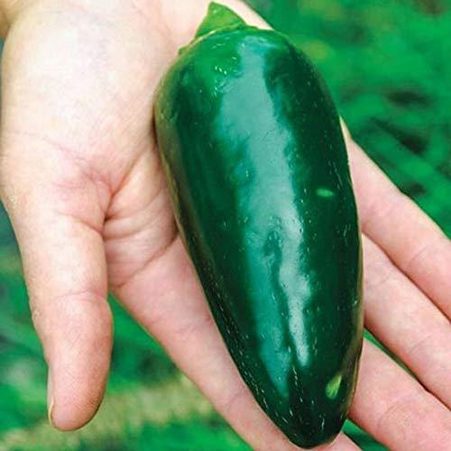 Grande Jumbo Extra Large Jalapeno Pepper Seeds