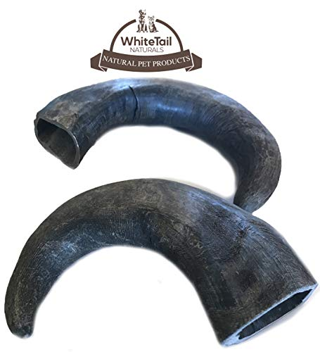 - WhiteTail Naturals Water Buffalo Bully Horn (2 Pack Large) All-Natural Dog Chew and Training Treat | High Protein, Low Fat, Grain Free | Promotes Dental Teeth and Gum Health
