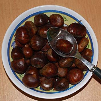 (Potseed - Sweet Chestnut Seeds)