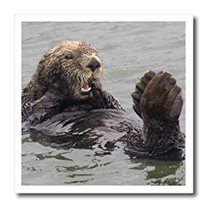 ht_45634_3 VWPics Africa - California Sea Otter resting with its paws and out of water to stay warm. Elkhorn Slough, California - Iron on Heat Transfers - 10x10 Iron on Heat Transfer for White Material