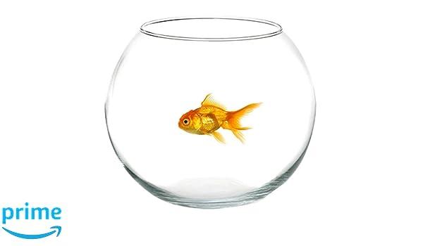 Takestop® Ampolla pecera de cristal transparente 20 cm Acuario para peces pescado rojo Centro Bandeja Jarrón Puerta Flor Flores vela: Amazon.es: Electrónica