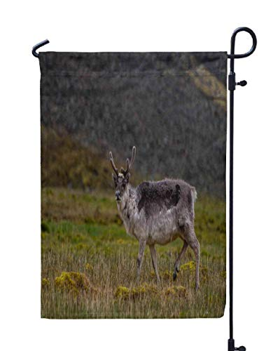 (Shorping Welcome Garden Flag, 12x18Inch Wild Reindeer in The Norway Arctic Svalbard for Holiday and Seasonal Double-Sided Printing Yards Flags)