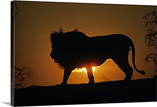 Canvas On Demand Premium Thick-Wrap Canvas Wall Art Print entitled African lion (Panthera leo) against sunset, Africa (African Lion Panthera Leo)