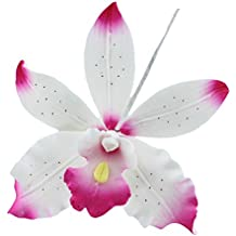 Brassavolaelio Orchid, White with Pink, 9 Count by Chef Alan Tetreault