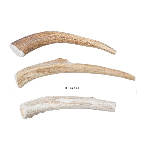 Bull Buffalo Horn (Medium 3-PACK 5-7 in. long, All-Natural Deer Antler Chews Natural Sheds)