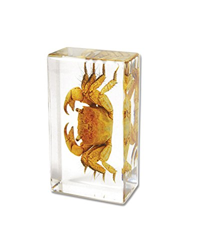 Crab Rectangular Paperweight 2 8 x1 6 product image