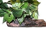 Magnaturals Medium Planter Ledge Earth - Magnetic Decor