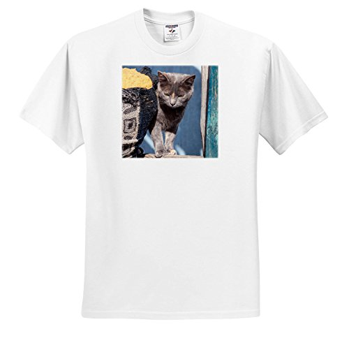 Price comparison product image 3dRose Danita Delimont - Cats - Cat and Sofa - T-Shirts - Youth T-Shirt XS(2-4) (TS_279252_11)