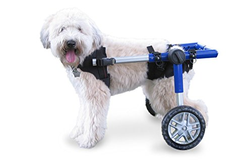 Walkin' Wheels Dog Wheelchair - for Medium Dogs 26-49 lbs - Veterinarian Approved - Wheelchair for...