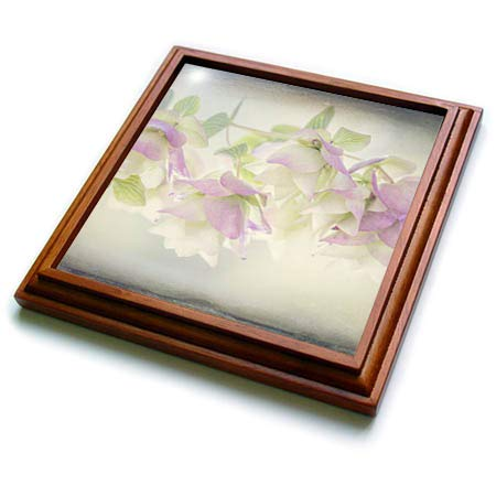 3dRose Danita Delimont - Flowers - USA, Washington State, Seabeck. Ornamental oregano flowers. - 8x8 Trivet with 6x6 ceramic tile (trv_315098_1)