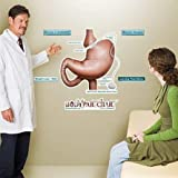 Gastric Lap Band Sticky Anatomy Wall Chart - Labeled - Large - 26 x 39.5