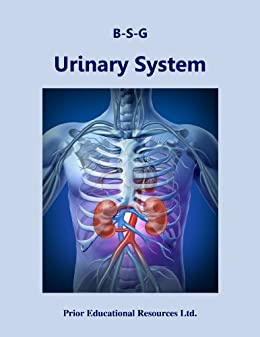 urinary system study guide Free flashcards to help memorize facts about chabner, language of medicine  8th edition, ch 7 urinary system other activities to help include hangman,.