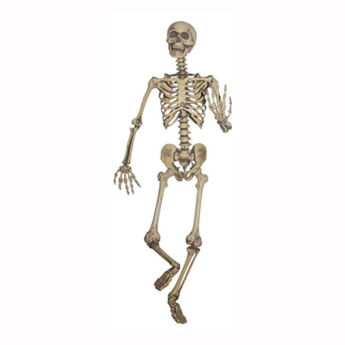 Sunstar Industries 5 Foot Life Size Pose & Hold Skeleton Halloween Decoration Prop -