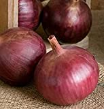 buy David's Garden Seeds Onion Cabernet Intermediate SV2581 (Red) 200 Organic Hybrid Seeds now, new 2018-2017 bestseller, review and Photo, best price $8.45