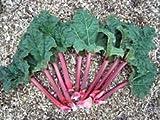Rhubarb Herbal Tea