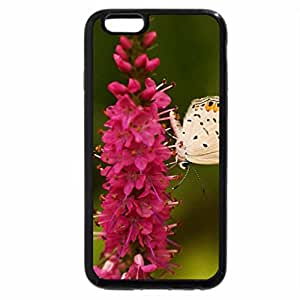 iPhone 6S / iPhone 6 Case (Black) Pretty Butterfly