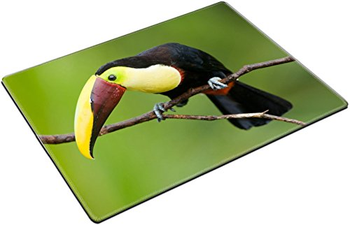 MSD Place Mat Non-Slip Natural Rubber Desk Pads design: 6870644 Chestnut mandibled Toucan or Swainsons Toucan Ramphastos swainsonii from Central (Chestnut Mandibled Toucan)