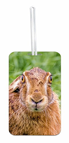 Hare Rabbit School Bag/Backpack ID Tag with Custom Back