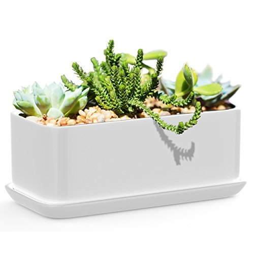 Elite Contemporary Table - Succulents Choice 10 inch Rectangular White Ceramic Succulent Planter: Modern Design Pot Includes Fitted Saucer With Drain Holes