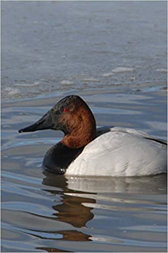 Canvasback Duck Journal Aythyra Valisineria 150 Page Lined Notebook Diary Image Cool 9781724970992 Amazon Com Books