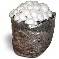 Kit Coltivazione Funghi Prataiolo Substrato Panetti Funghi Casa Giardino