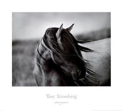 Fierce grace tony stromberg western horse print poster animal art poster print by tony stromberg