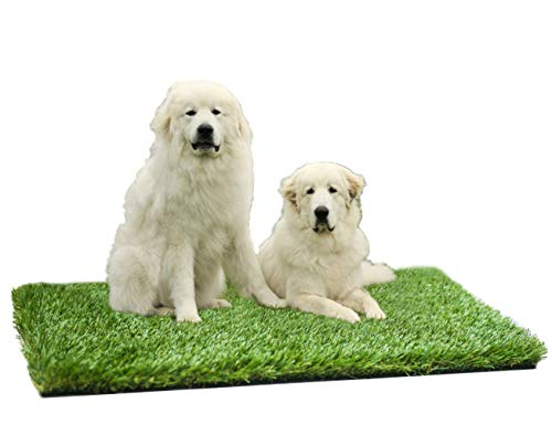 "MTBRO Artificial Grass, Perfect Outdoor Grass Mat for Dogs, Realistic Artificial Turf for Dogs and Patio, Blade Height 1.5"", 100oz/sq.yd, 3 ft X 5 ft"