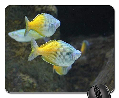 (Mouse Pad - Tropical Fish Saltwater Water Ocean Marine)