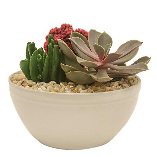 Costa Farms Pink Desert Gems Garden in 6 in. Gloss Ceramic Bowl