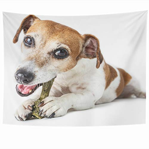 Ahawoso Tapestry 60x50 Inch Front Bone Adorable Dog Jack Russell Terrier Lying Enjoying Chewing Pet Supplements Bowl Canine Tapestries Wall Hanging Home Decor for Living Room Bedroom - Tapestry Jack Russell Throw